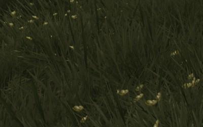 Oblivion Grass Overhaul その1